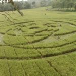 Indonesia's crop circle and Hindu symbolism
