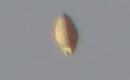 UFO/OVNI captured on film over Tijuana, Mexico